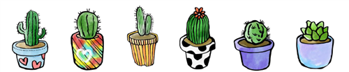 Six cactus pot plants